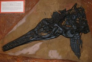 Ichthyosaur_2